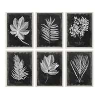 Uttermost Foliage Framed Prints Set Of 6